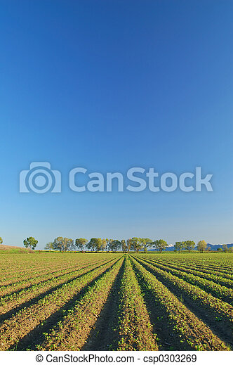 vidéki táj, vidéki - csp0303269