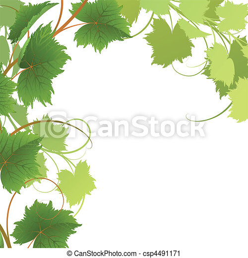 Vine - csp4491171