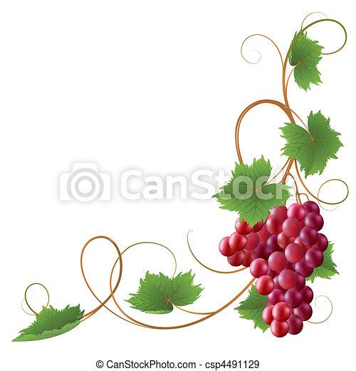 Vine - csp4491129