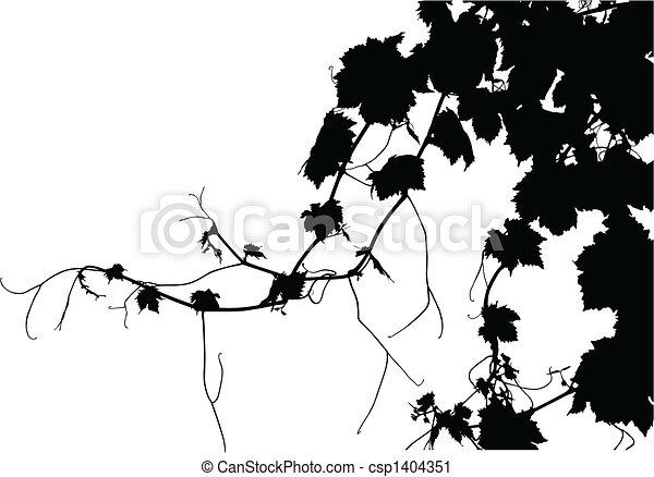 Viña de uva - csp1404351