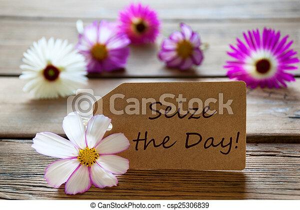 vida, alemán, cita, cosmea, soleado, etiqueta, flores - csp25306839