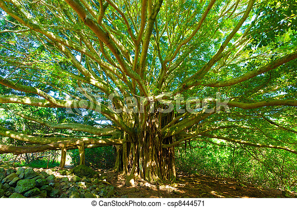 Árbol de la vida, árbol baniano increíble - csp8444571