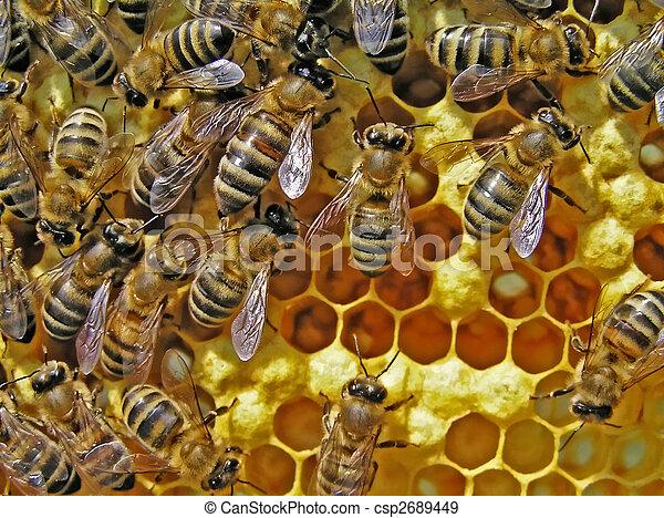 Vida de abejas. Reproducción de abejas. - csp2689449