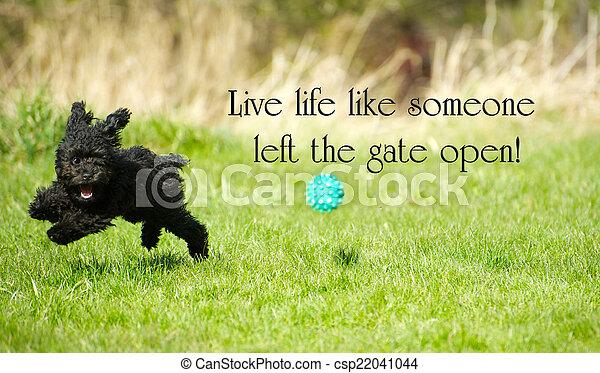 """vida, brinquedo, ao redor, felizmente, inspirational, fullest, poodle, open"""", esquerda, alguém, palavras, """"live, portão, desfrutando, adorável, summer., rasgando, semelhante - csp22041044"""