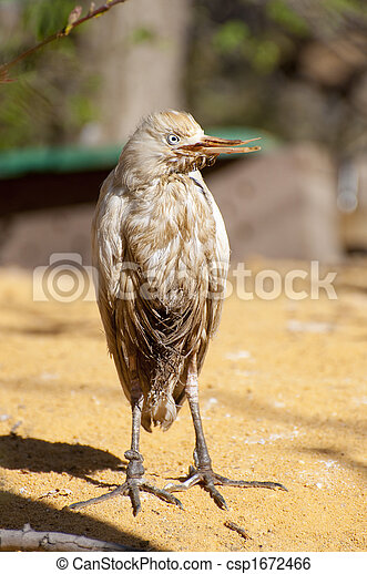 Pájaro salvaje - csp1672466