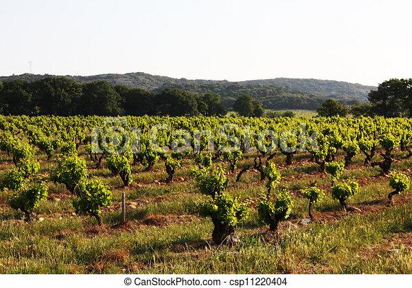 Viñas - csp11220404