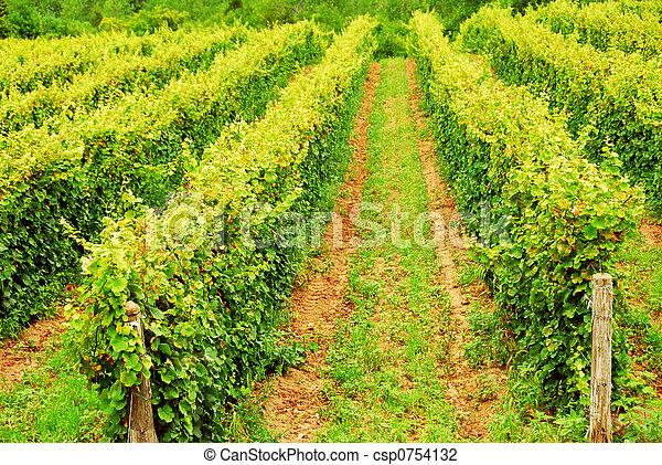 Viñas - csp0754132