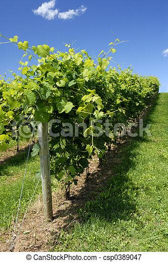 Viñas - csp0389047