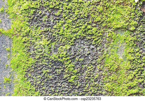 Moss en la antigua textura de la pared de hormigón. - csp23235763