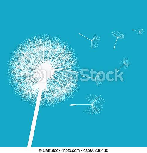Dandelion en el viento - csp66238438