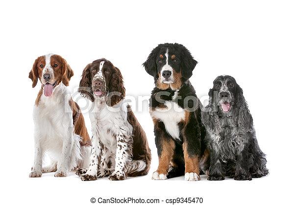 vier, hunden, reihe - csp9345470