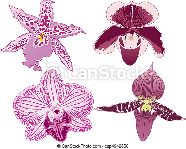vier, orchideen - csp4942850