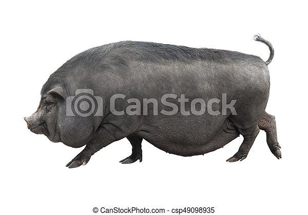 Großartig Schwein Draht Geschweißte Draht Vs Ideen - Die Besten ...