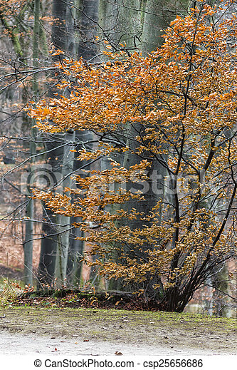 View of a Park in Autumn - csp25656686
