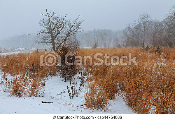 View of a park in winter - csp44754886