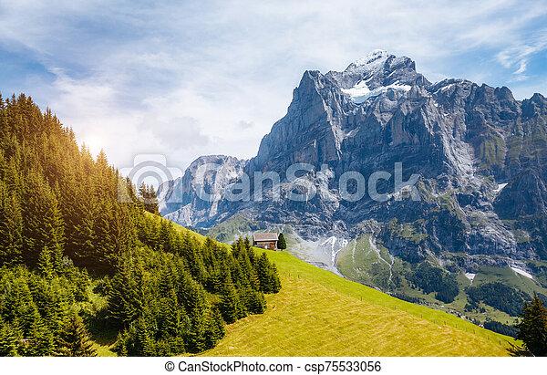 View of alpine Eiger village. Location place Swiss alps, Grindelwald, Europe. - csp75533056