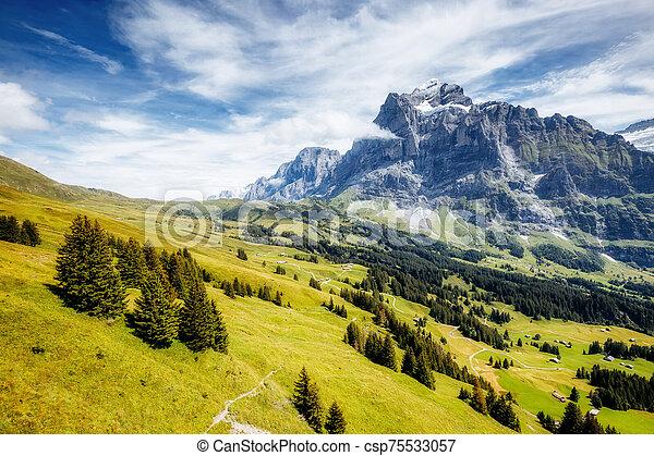 View of alpine Eiger village. Location place Swiss alps, Grindelwald, Europe. - csp75533057