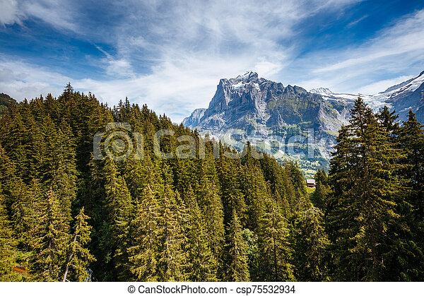 View of alpine Eiger village. Location place Swiss alps, Grindelwald, Europe. - csp75532934