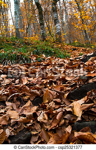 View of Autumn Leaves - csp25321377