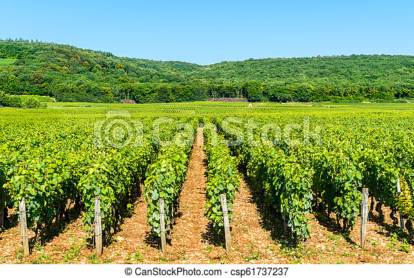 View of Cote de Nuits vineyards in Burgundy, France - csp61737237