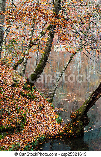 View of Forest in Autumn - csp25321613