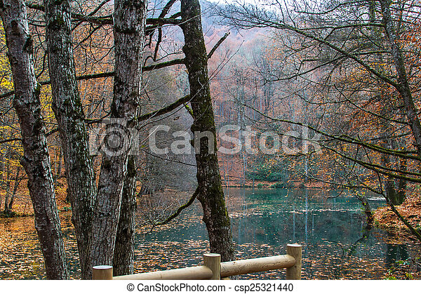 View of Forest in Autumn - csp25321440