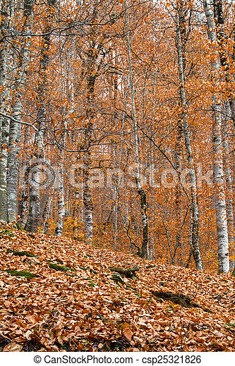 View of Forest in Autumn - csp25321826
