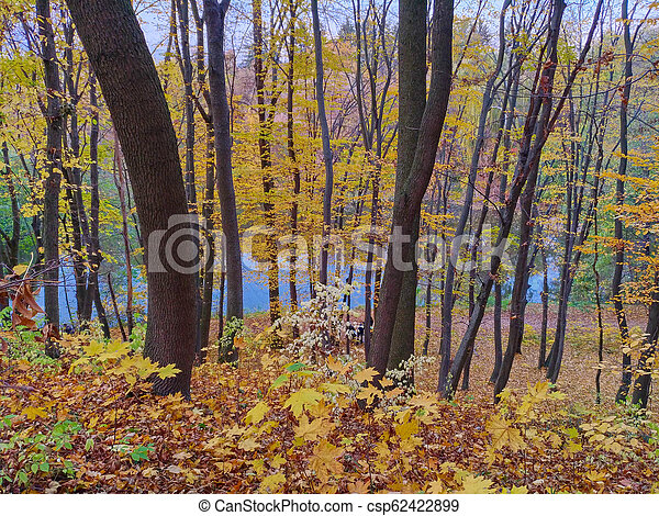 View of forest in autumn, trees and leaves - csp62422899