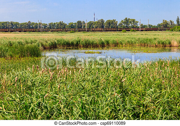 View of lake overgrown with bulrushes on summer - csp69110089