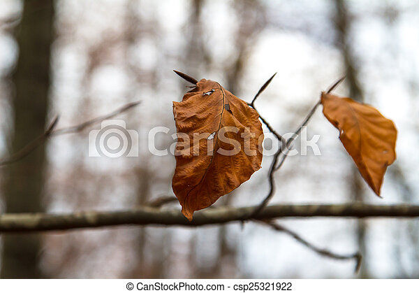 View of Leaves in Autumn - csp25321922