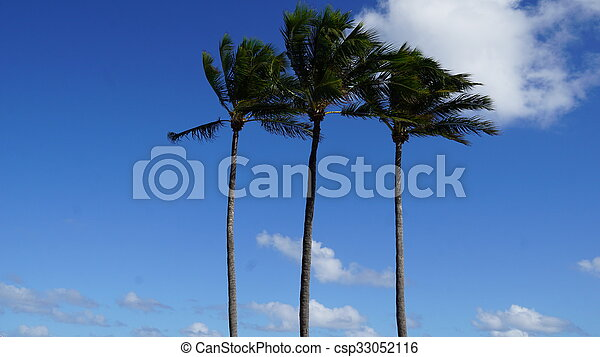 View of Palm Beach in Florida - csp33052116