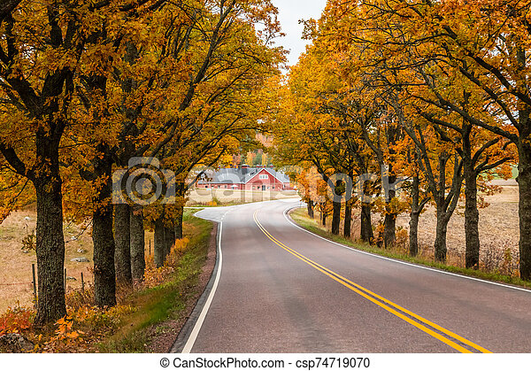 View of road with oak trees alley at autumn - csp74719070