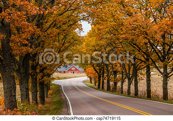 View of road with oak trees alley at autumn - csp74719115