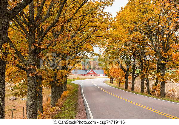 View of road with oak trees alley at autumn - csp74719116