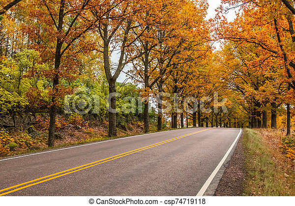 View of road with oak trees alley at autumn - csp74719118