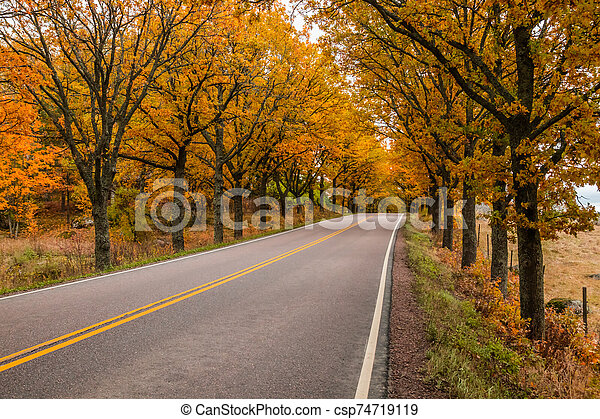 View of road with oak trees alley at autumn - csp74719119