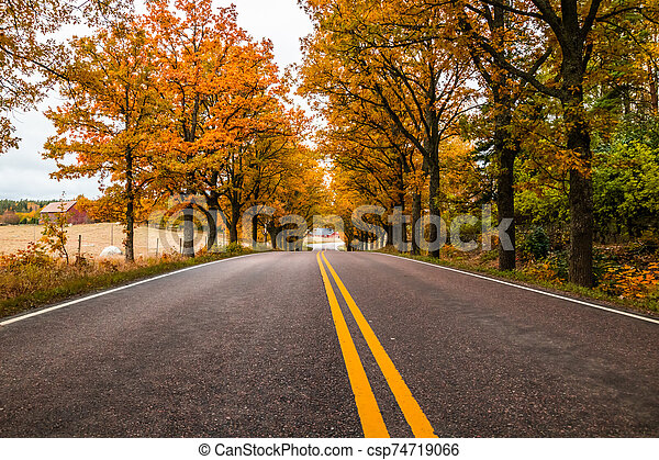 View of road with oak trees alley at autumn - csp74719066