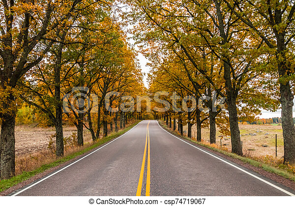 View of road with oak trees alley at autumn - csp74719067