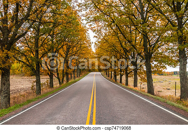 View of road with oak trees alley at autumn - csp74719068