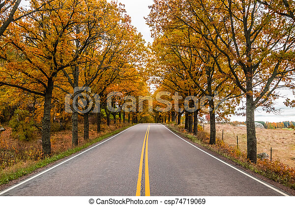 View of road with oak trees alley at autumn - csp74719069