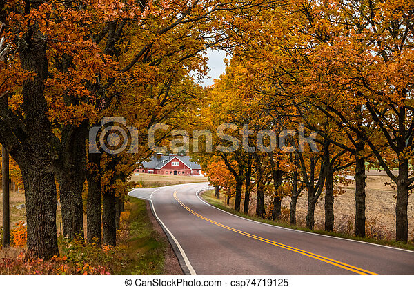 View of road with oak trees alley at autumn - csp74719125
