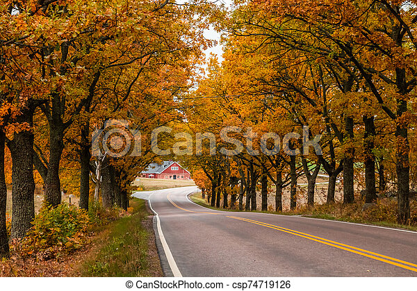 View of road with oak trees alley at autumn - csp74719126