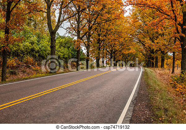 View of road with oak trees alley at autumn - csp74719132