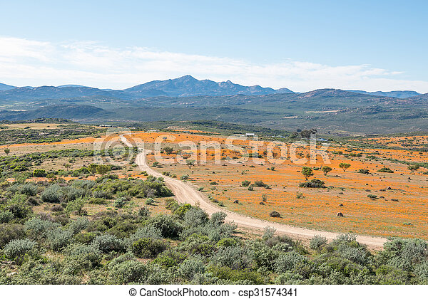 View of Skilpad in the Namaqua National Park  - csp31574341
