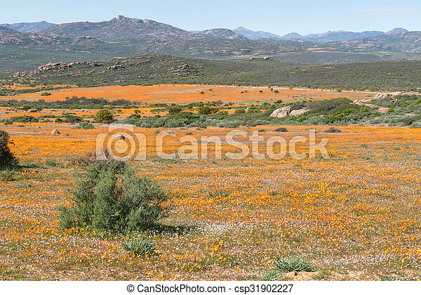 View of Skilpad in the Namaqua National Park - csp31902227