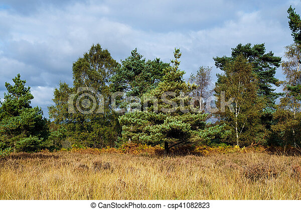 View of the Ashdown Forest in Autumn - csp41082823