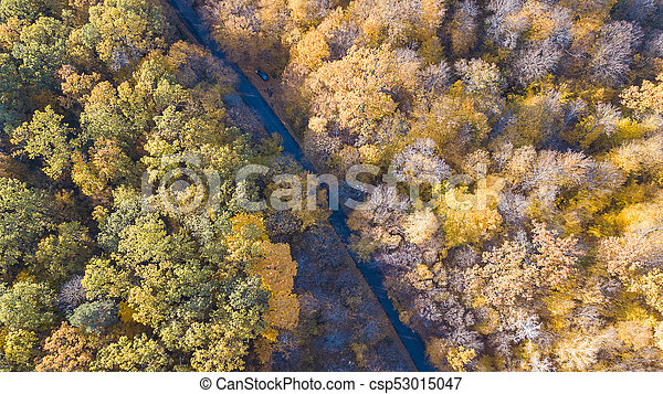 View of the road at forest with trees covered yellow foliage - csp53015047