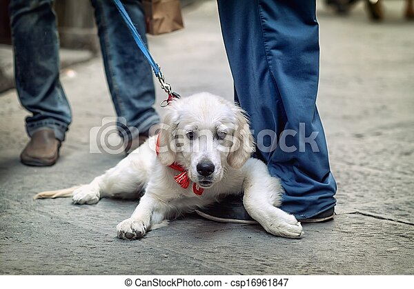 View of the street from the dog's perspective - csp16961847