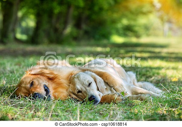 View of two dogs lying - csp10618814