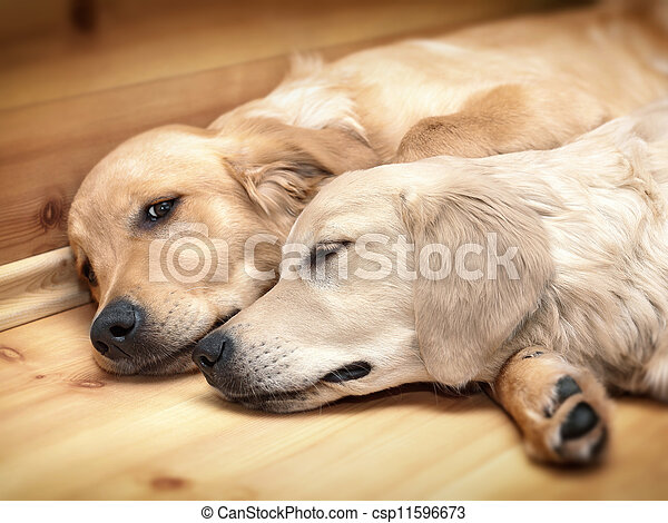 View of two dogs lying - csp11596673